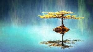 Uma árvore em um lado